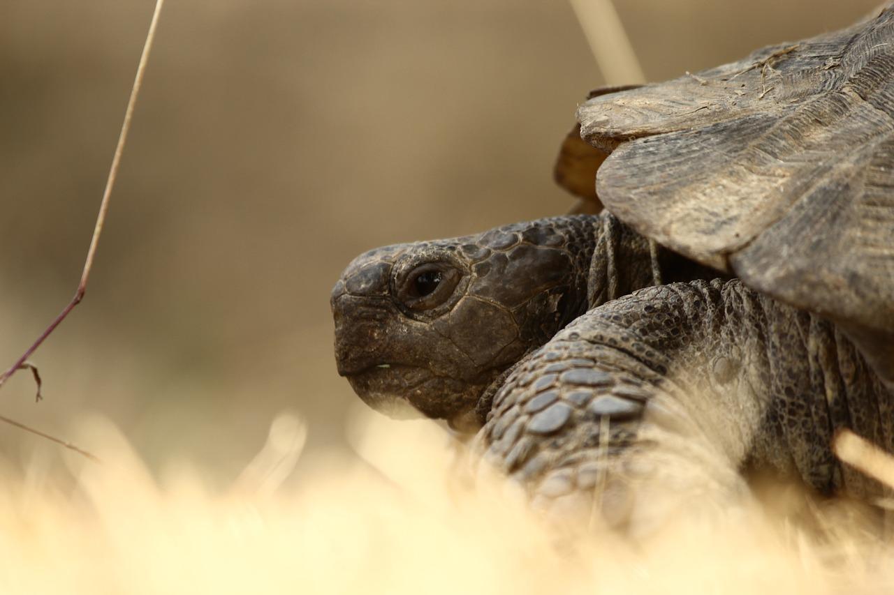 Ces animaux qui nous enseignent la lenteur