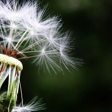 4 inspirations pour gérer le flot de ses pensées