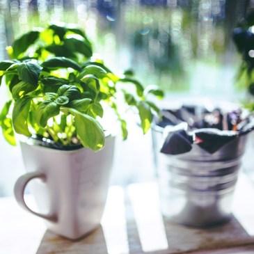 Votre petit jardin potager !