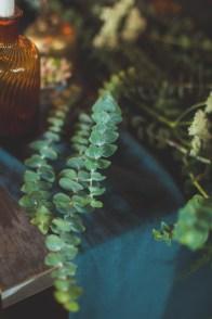 Branche d'eucalyptus