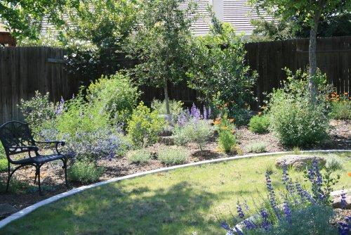 Native plant garden in Bakersfield