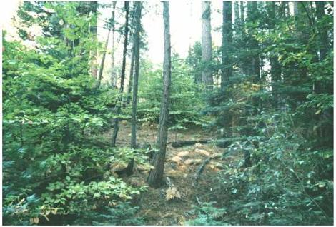 California mixed evergreen forest