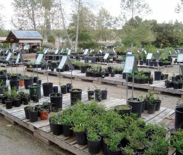 Our Nursery Has A Friendly Staff And Native Plants For The Butterflies And Birds The