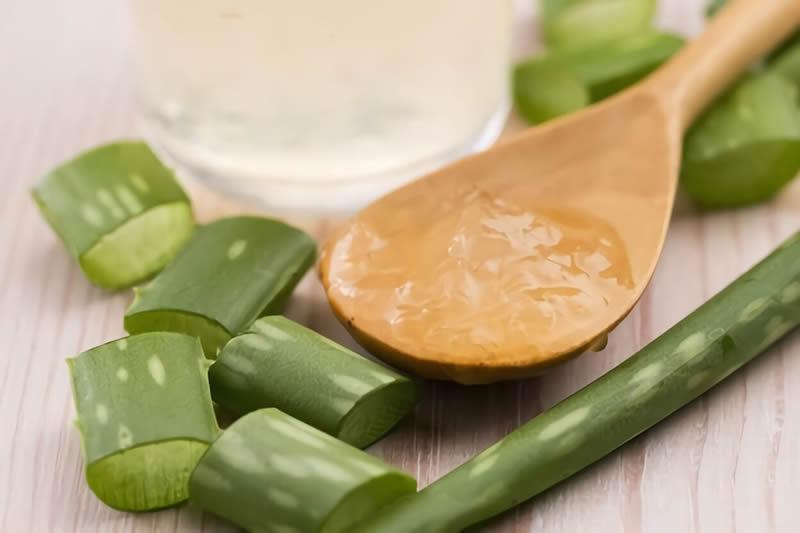Propiedades del  Aloe una planta digestiva y laxante