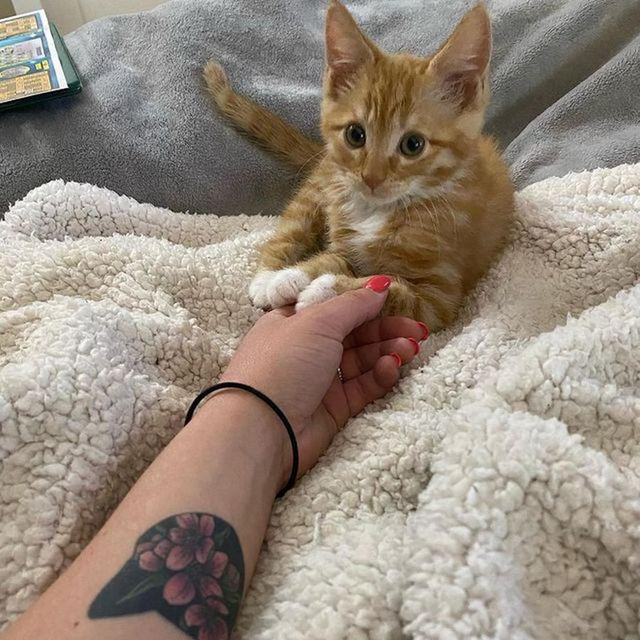 gatto felice05