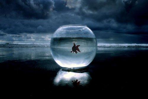 Fuori dall'acquario