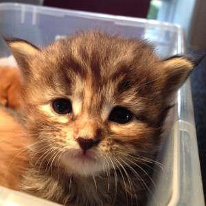 Weekly kitten roundup #3