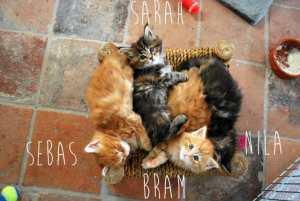 Weekly kitten roundup #6