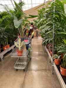 Lees meer over het artikel Diary week 12: avondwandelingen door Antwerpen & planten shoppen