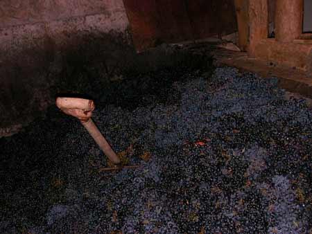 pisado la uva