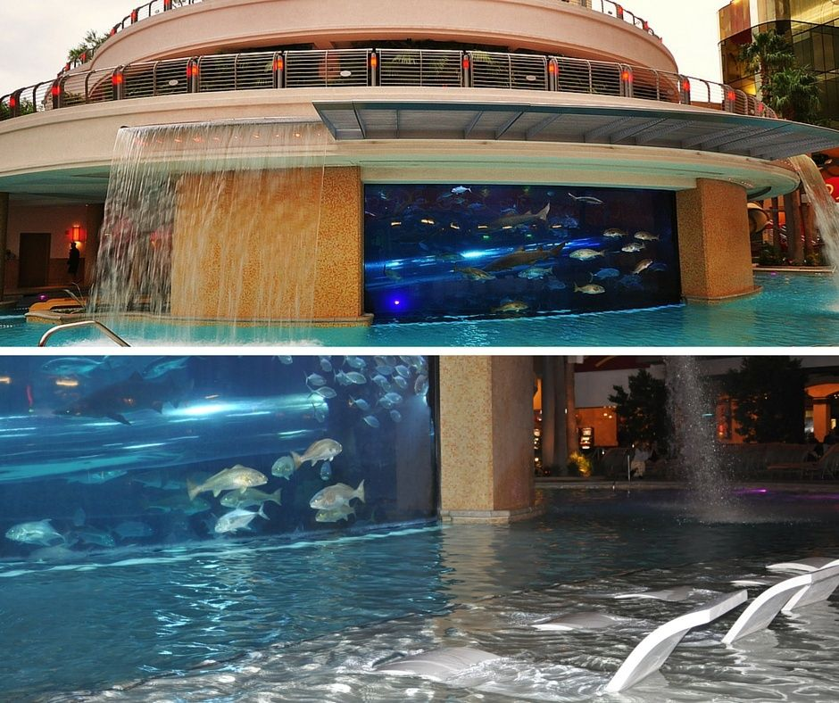 Golden Nugget Tank Shark Pool Las Vegas