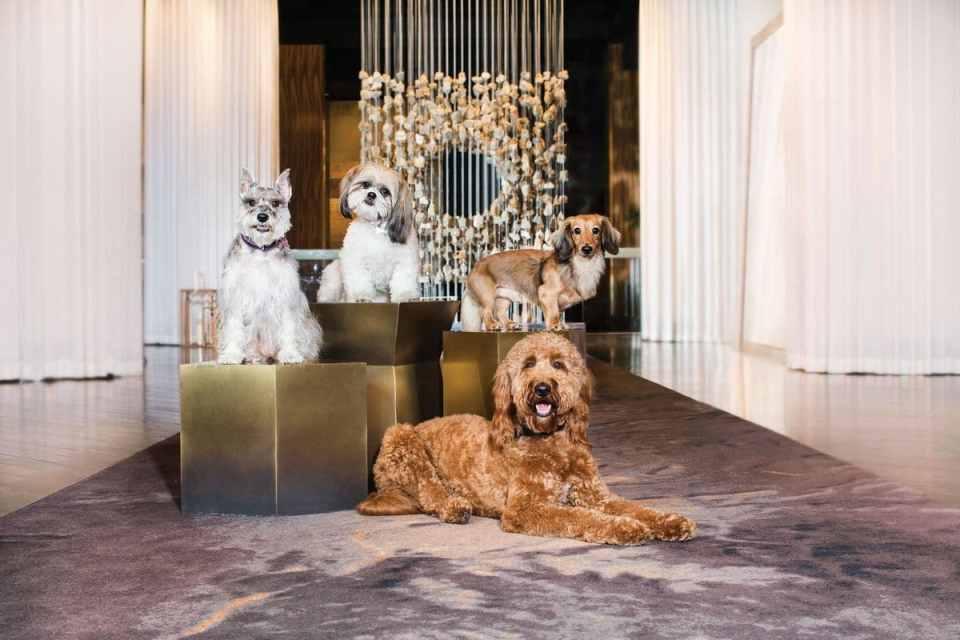 Delano Las Vegas Dog Friendly Suite