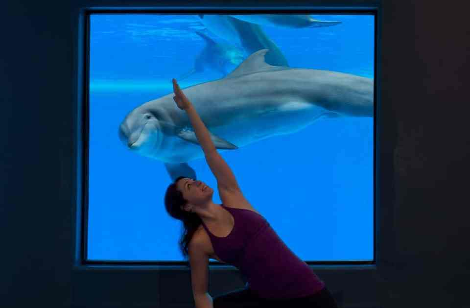 Mirage Las Vegas Yoga with the Dolphins
