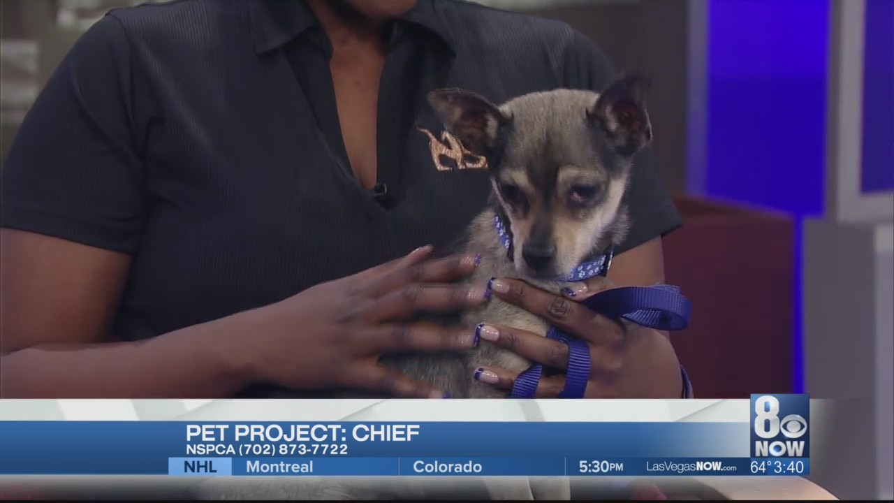 Chief is looking for a forever home