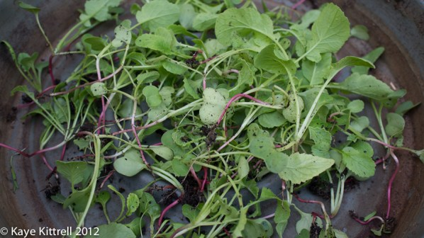 About the radishes... - thinned radish leaves