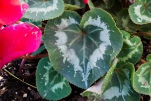 Valentine Garden – My Special Day
