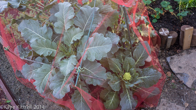 Finding Solutions for Pests-voile