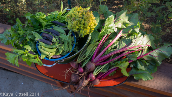 Winter Harvest is Beginning-harvest