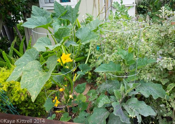 My Easy Ratatouille-plants