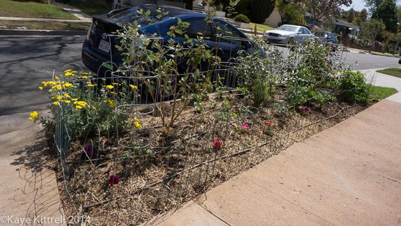 Planting my parkway-parkway