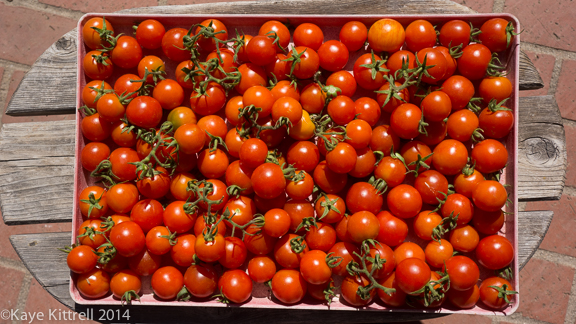 Heat Wave Pushes Summer Veggies into Fall - tomato harvest