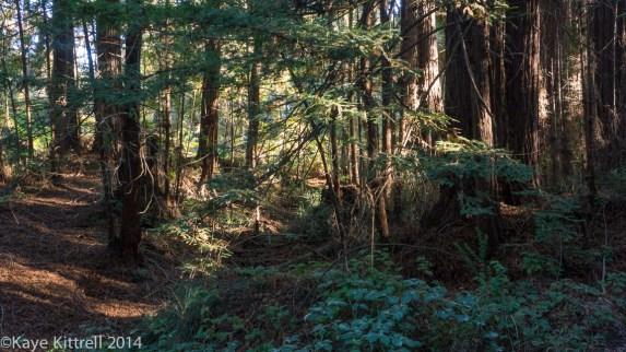 Nature walk-Name that fungi!-Trail