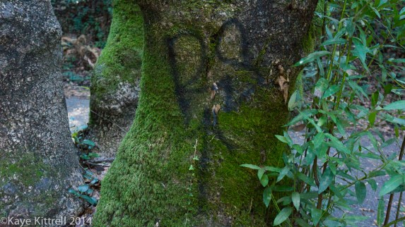 Nature walk-Name that fungi!-graffiti tree