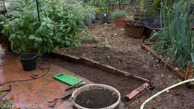 Make the most of the rain event, plant! - prepared soil