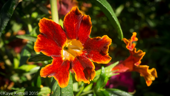 What are you doing for Earth Day? - Fiesta Marigold