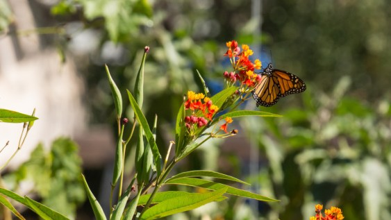 February Blooms! - Monarch