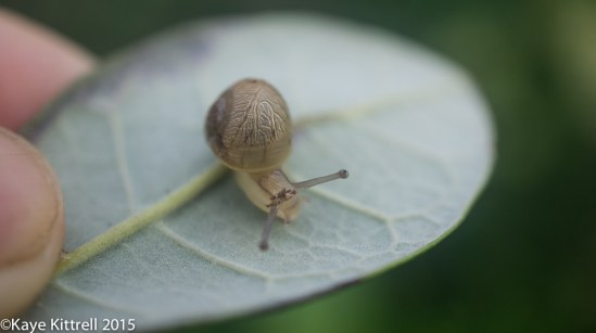 Morning Impressions - snail