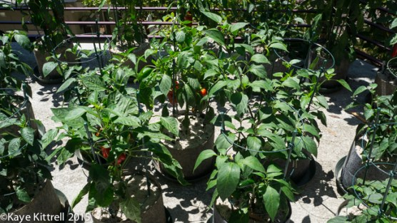 Top 5 Late Bloomer Lessons! - peppers