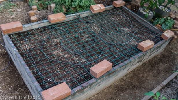 Battening down the hatches - raised bed