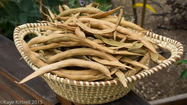 Supreme Scarlet Emperor Beans -  pods in basket