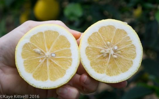 An Oscar-worthy Homegrown Brunch - cut lemon