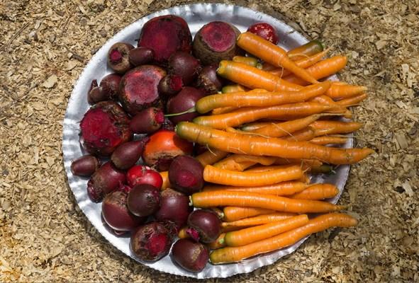 End of Winter Stew - harvest