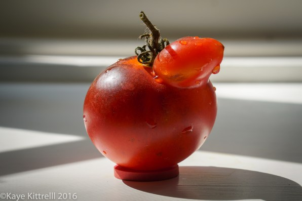 Ugly is Beautiful (Tomatoes) - Chick