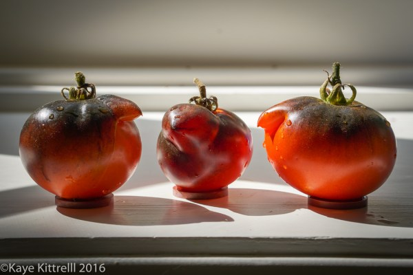 Ugly is Beautiful (Tomatoes) - Henpecked