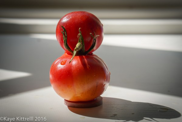 Ugly is Beautiful (Tomatoes) - Roosting