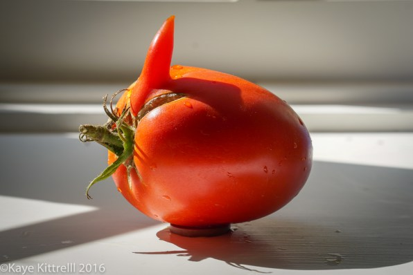 Ugly is Beautiful (Tomatoes) - Rooster