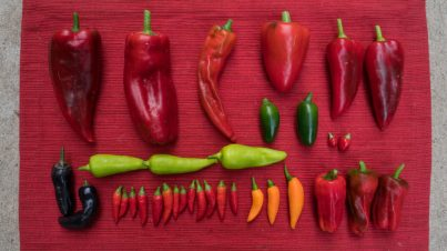 New Growing Peppers Videos - peppers