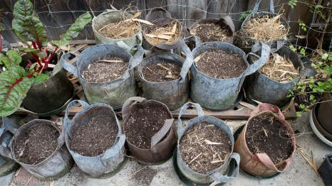 Urban Garden Improvisation - pots with biomass
