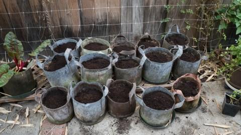Urban Garden Improvisation - pots with coffee grounds