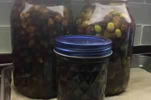 Salt Brine Olives