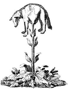 Agnello vegetale della Tartaria (Barometz)