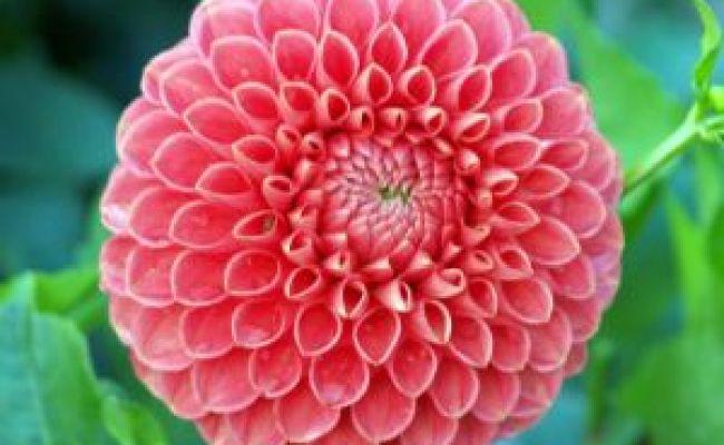 Fleur Qui Commence Par A L Atelier Des Fleurs