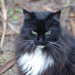 What a beautiful and smart cat he was. Miss him heaps