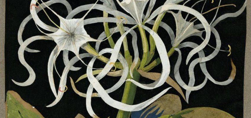 The Flowering of Mary Delany's Ingenious Mind: At Age 72 She Invented Collage!