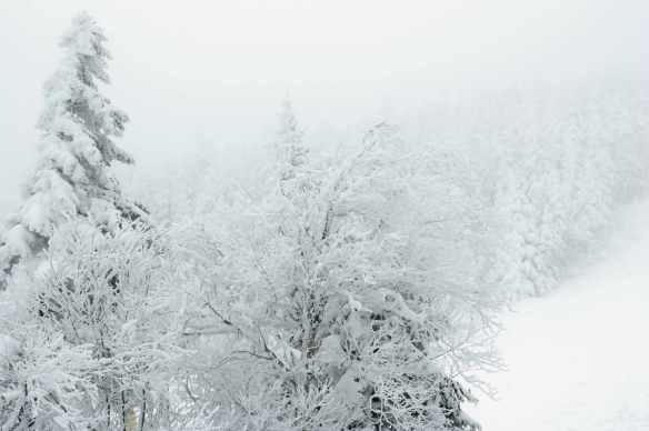 Winter_13_0949