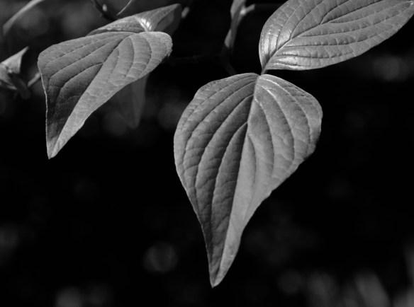 A_Spring_2011_110